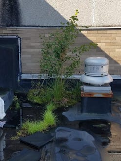 Plant Buildup on Low Slope Roof