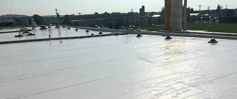 Wet Roof (Canada)
