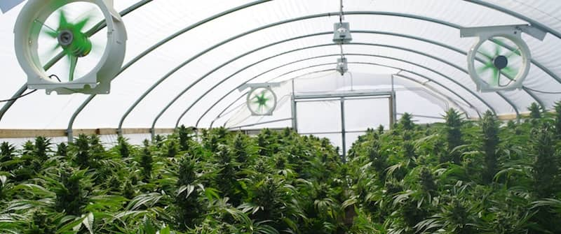 Cannabis Cultivation Facility