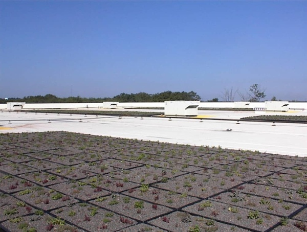 Green Roof Installation at IKEA in Stoughton, Massachusetts